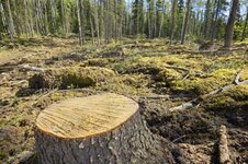 deforestation-2.jpg