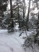 Snowdon Trees.jpg